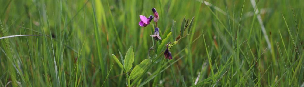 Dansk Botanisk Forening